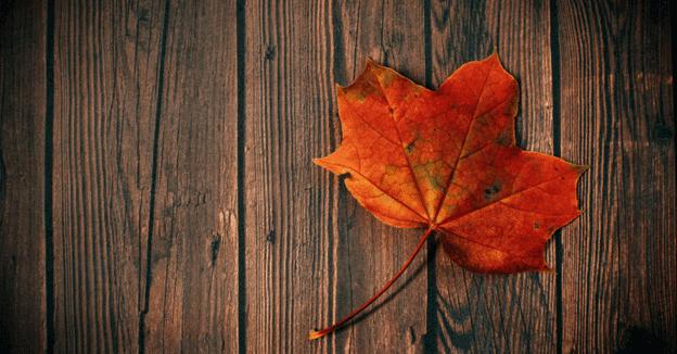 maple-hardwood-flooring